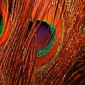 Amber Waves Of Plumage by Christi Kraft