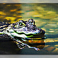 American Alligator 2 by Walter Herrit