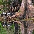 American Anhinga Or Snake-bird by Christine Till