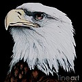 American Bald Eagle by Bill Richards