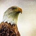 American Bald Eagle With Flag by Natasha Bishop