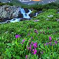 American  Basin Waterfall by David Ross