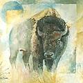 American Bison Buffalo Bull by Christiaan Bekker