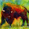 American Buffalo by Hailey E Herrera