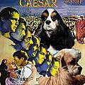 American Cocker Spaniel Art - Julius Caesar Movie Poster by Sandra Sij