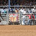 American Cowboy Bucking Rodeo Bronc by Sally Rockefeller