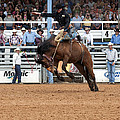 American Cowboy Riding Bucking Rodeo Bronc I by Sally Rockefeller