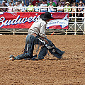 American Cowboy Thrown From A  Bucking Rodeo Bronc by Sally Rockefeller