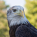 American Eagle by Jeanne May