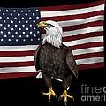 American Eagle by Karen Sheltrown
