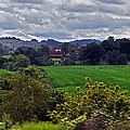 American Farmland 2 by Lydia Holly
