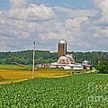 American Farmland 3 by Lydia Holly