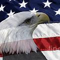 American Flag And Bald Eagle by Jill Lang