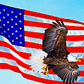 American Flag With Bald Eagle by Greg Norrell