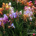 American Giverny by RC DeWinter