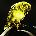 American Gold Finch by Monique Morin Matson