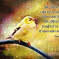 American Goldfinch Gazes Upward  - Series II  Digital Paint With Verse by Debbie Portwood