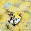 American Goldfinch On A Cedar Twig With Digital Paint And Verse by Debbie Portwood