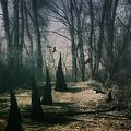 American Horror Story - Coven by Tom Mc Nemar