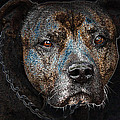 American Mastiff by Tage Persson