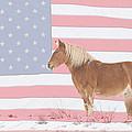 American Palomino by James BO Insogna