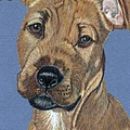 American Pit Bull Terrier Puppy by Anita Putman