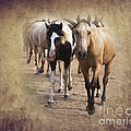 American Quarter Horse Herd by Betty LaRue