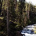 American River by Edward Hawkins II