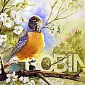 American Robin And Wild Plum by Gail Vass