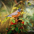 American Robin - Harbinger Of Spring by Lianne Schneider