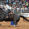 American Rodeo Female Barrel Racer Dark Horse II by Sally Rockefeller