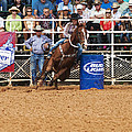 American Rodeo Female Barrel Racer White Blaze Chestnut Horse Iv by Sally Rockefeller