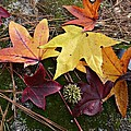 Autumn by William Tanneberger