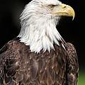 American Symbol by Dale Kincaid