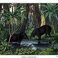 American Tapir by Splendid Art Prints