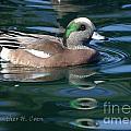 American Widgeon Duck by Heather Coen