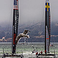 Americas Cup Oracle Team Usa V Artemis Racing by Kate Brown