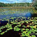 Ames Pond by Jim Block