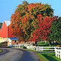Amish Barn In Autumn by Dan Sproul