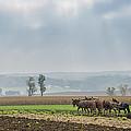 Amish Boy Plowing by Bruce Neumann