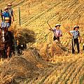 Amish Boys Wheat Harvest  by Blair Seitz