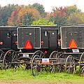 Amish Buggies 2 by Mary Carol Story