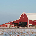 Amish Buggy And Red Barn by David Arment