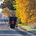 Amish Buggy And Yellow Leaves by David Arment