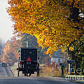 Amish Buggy Fall 2014 by David Arment