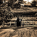 Amish Buggy On A Country Road by Bill Cannon
