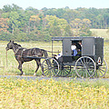 Amish Buggy by Pineapple XVI