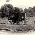 Amish Buggy Sept 2013 by David Arment