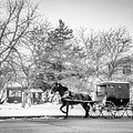 Amish Buggy by Tom Gort