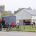 Amish Country by Susan Patrie